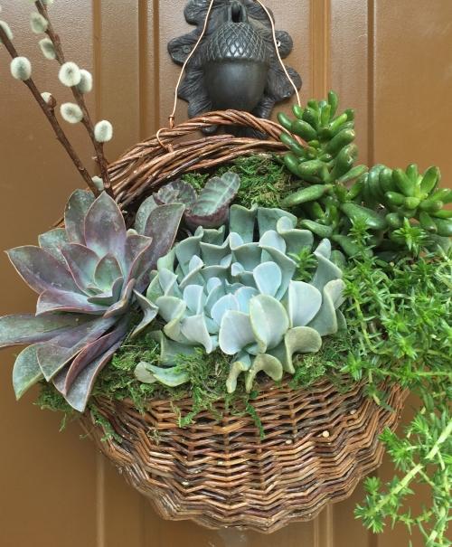 amydressed-succulents.jpg